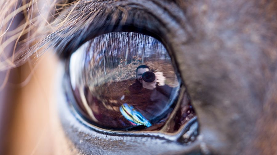 Eye Auge Tübingen SEL90M28G Sony A6000 Spiegelung Pferd Pferdeauge Horse Horse Eye Close-up Day No People Animal Themes Outdoors Nature Eyeball Shades Of Winter Love Yourself Colour Your Horizn This Is Masculinity