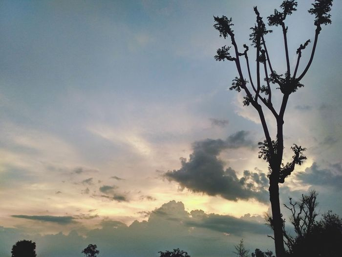 Tree Sunset Mountain Nature Sky Outdoors Silhouette Beauty Beauty In Nature Forest Rural Scene No People Branch Day City Mobilephotography MIphotography Beginnerphotographer Cloud - Sky Beauty In Nature Indianphotography