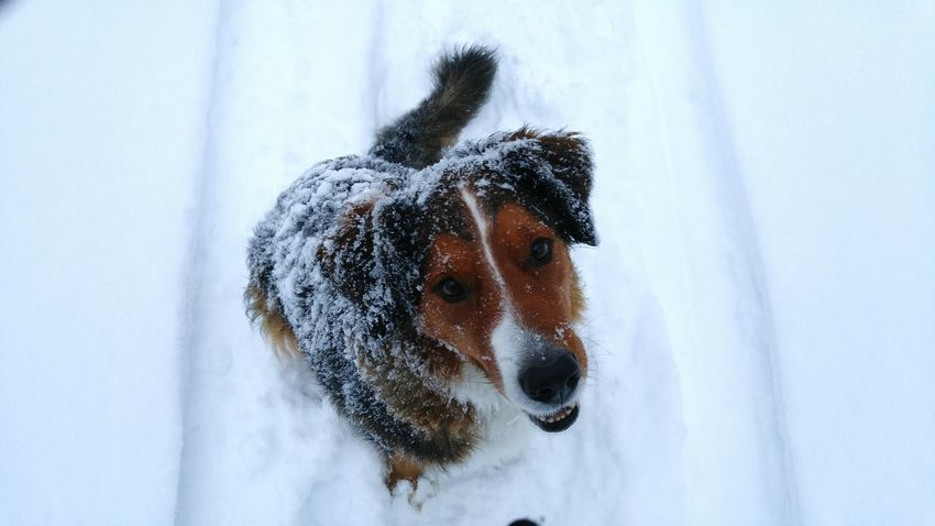Dog Domestic Animals Pets Snow Winter Chien Cold Temperature The Great Outdoors - 2016 EyeEm Awards