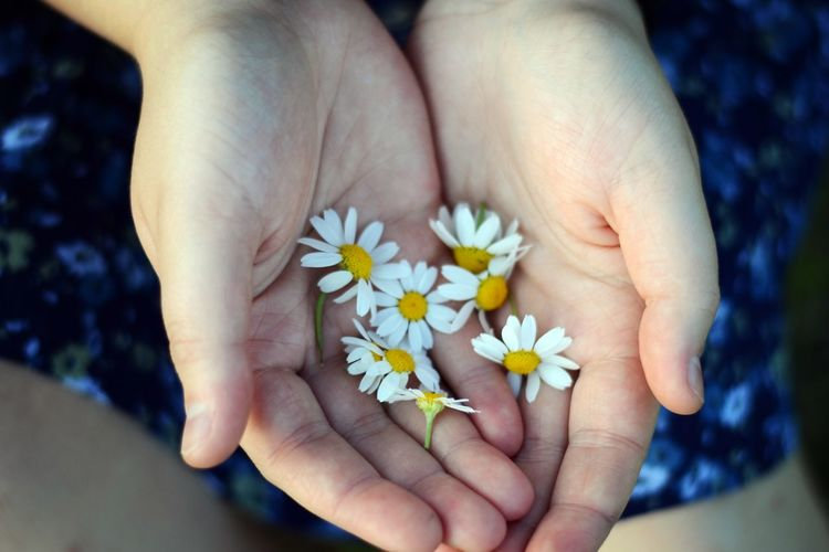 Daisy Beauty In Nature Blue Skirt Close-up Dasies Finger Flower Fragility Hand Holding Human Body Part Human Hand Plant Skirt