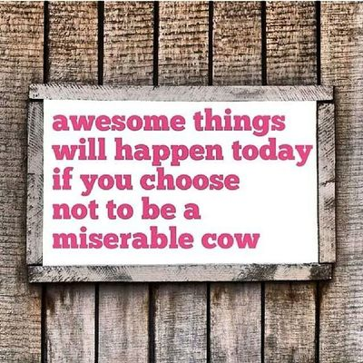 "Challenge accepted ""awesome things will happen today if you choose not to be a miserable cow"" - Bring it on 30th Year...I got you on lock."