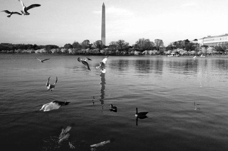 Blackandwhite Black Water Bird Group Of Animals Architecture Reflection Waterfront Nature
