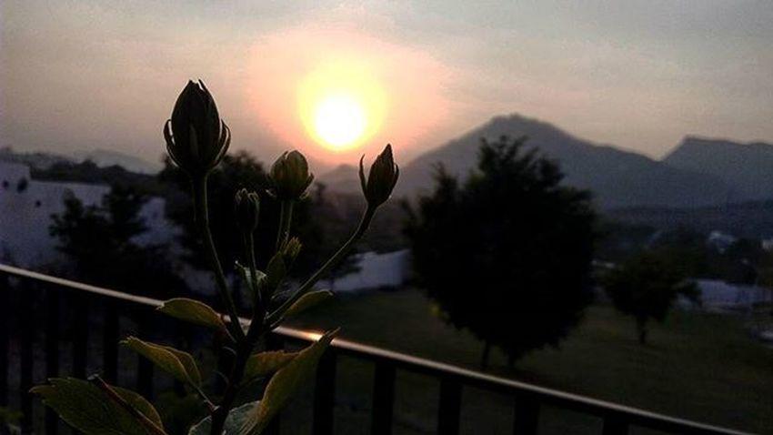 📷📷 jst bcoz she loved Flowers😖😔😳 Flower Flowerphotography Buddingflower SunsetBackground HDR Igshots Igers Igphotomagic Igers_wanderlust Geo .Clicks PostingAfterLongTime ......
