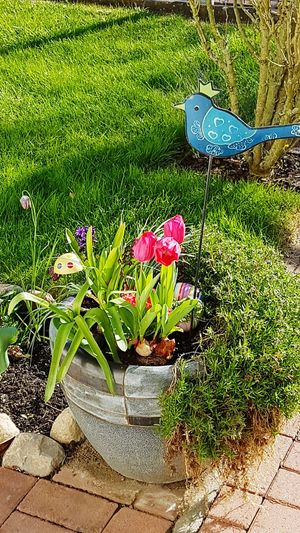 Outdoor Photography Day No People Grass Growth Nature Plant Beauty In Nature Freshness Green Color Multi Colored Outdoor Decorations Flowers Deco Birds Tulips Keramik Flower Pot