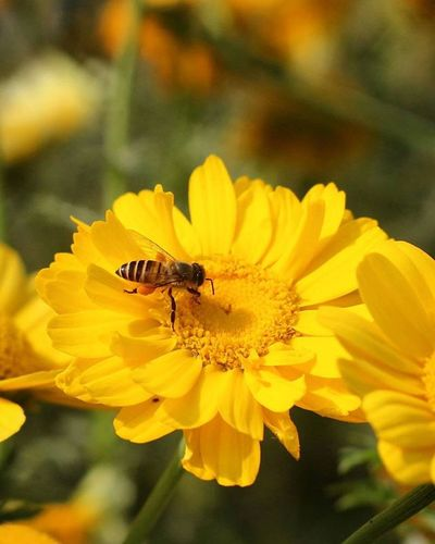 Honeyandbee Flowerstagram Randomphotography