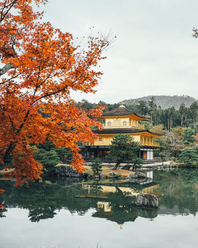GoldenTemple Tree Plant Water Built Structure Autumn Architecture Reflection Nature Waterfront Lake Change Building Exterior Sky No People Orange Color Beauty In Nature Day Building Growth Outdoors It's About The Journey