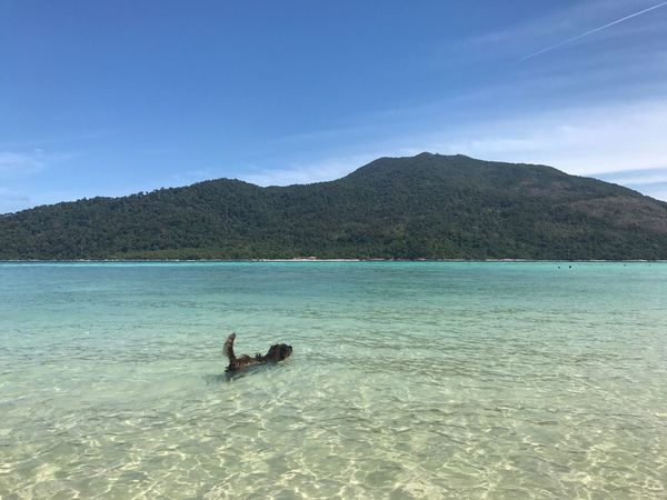 Dog in clear water Water Sky Sea Blue Scenics Real People Nature Beauty In Nature Leisure Activity Beach Lifestyles Two People Day Vacations Tranquility Outdoors Tranquil Scene Tree Full Length Human Leg Nofilter Dog