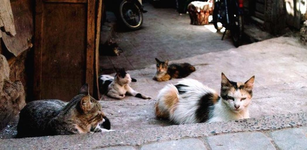 Cat gang in the
