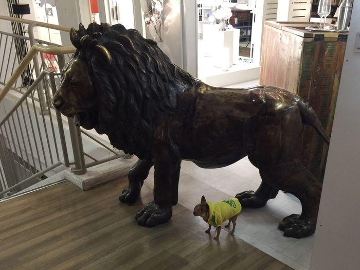 Lion & Friend