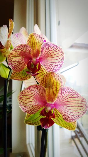 Flower Flower Head Freshness Fragility Beauty In Nature Petal Nature Orchid Close-up Plant Flowers Flower Collection