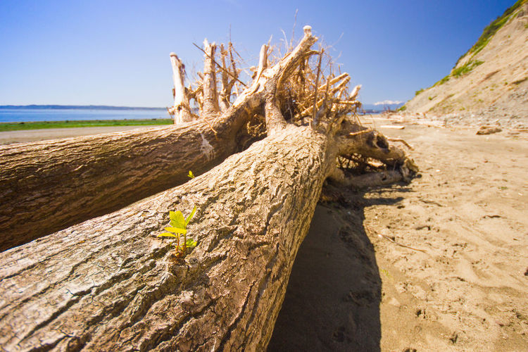 Beauty In Nature Blue Close-up Day Landscape Nature No People Non Urban Scene Non-urban Scene Outdoors Scenics Shore Sky Sunlight Tranquil Scene Tranquility Trunk Wood Wood - Material Two Is Better Than One