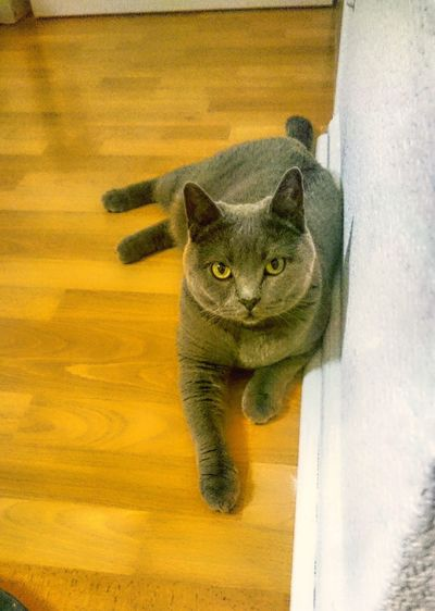 Yellow Pets Mammal Portrait Looking At Camera No People One Animal Domestic Cat Domestic Animals Animal Themes Indoors  Close-up