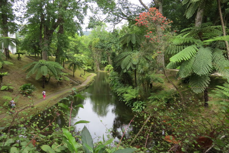 Açores - São Miguel Idyllic Nature Plant Terra Nostra Park Tranquil Scene Tree Vacation Time ♡ Water