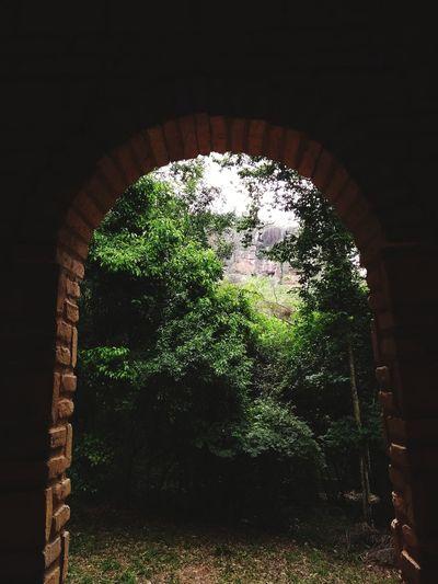 la entrada a la naturaleza No People Tree Architecture Outdoors Close-up