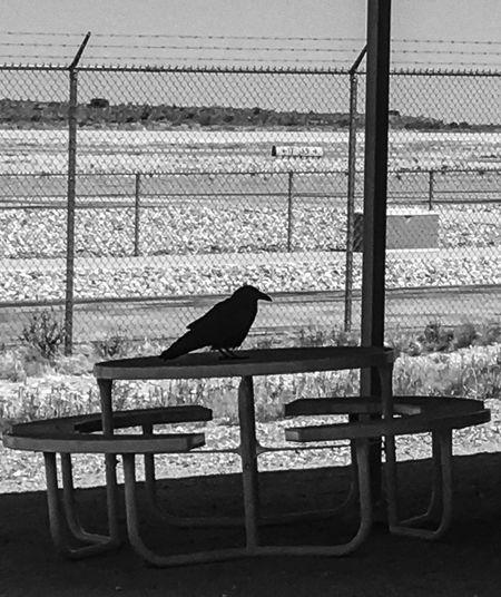 View of bird perching on bench
