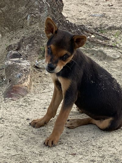 Portrait of dog sitting on land