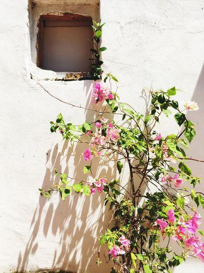 Flower Melaka