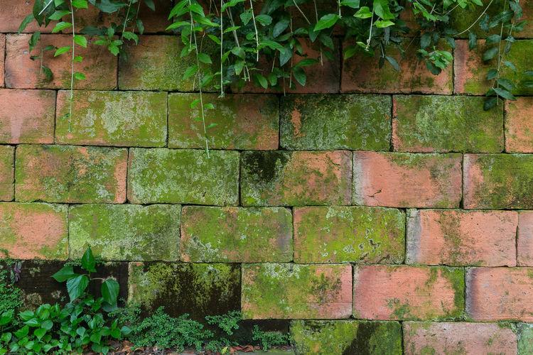 Full frame shot of ivy