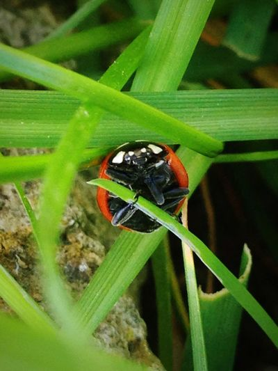 Nature On Your Doorstep Ladybird Nature Beautiful