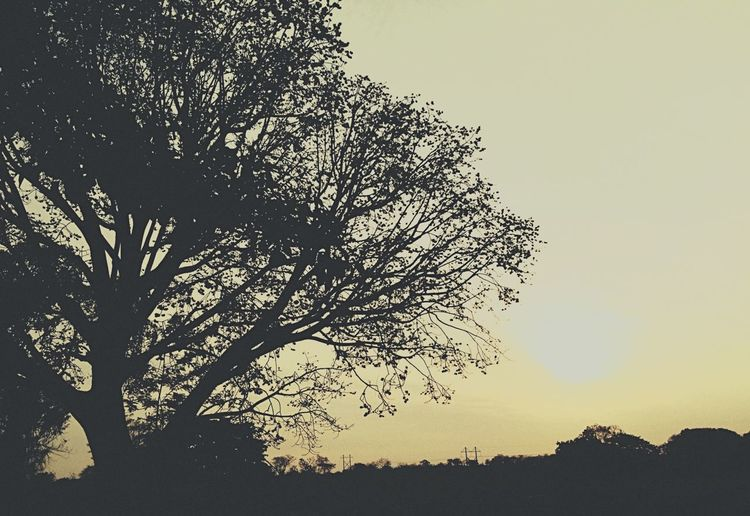 Sunset Yellow Tree Energy VSCO Natural Sun Nature Contrasts Day Scene Darknessinthelight
