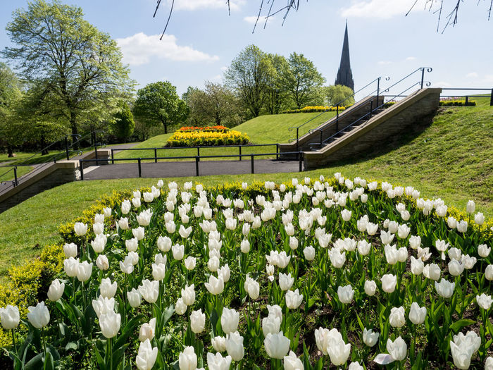Flowers in the Park Beauty In Nature Blooming Day Field Flower Flower Head Flowerbed Fragility Freshness Grass Growth Landscape Nature No People Outdoors Plant Scenics Sky Springtime Tranquil Scene Tranquility Tree Tulips Flowers Tulips In Park White Tulips