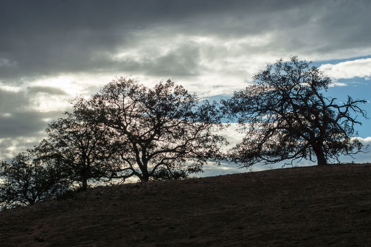 Tree Nature No People Sky Cloud - Sky Beauty In Nature Outdoors Landscape Day Blue Tranquil Scene Scenics Dramatic Sky