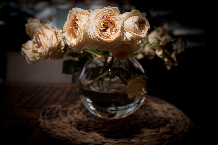Close-up of rose on table