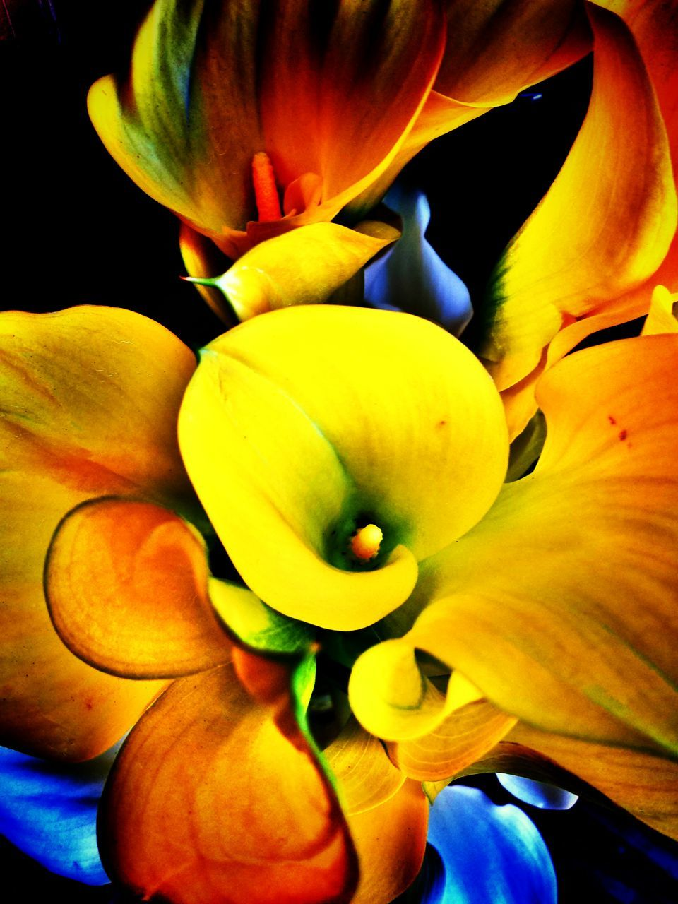 flower, petal, beauty in nature, freshness, nature, growth, fragility, flower head, yellow, close-up, no people, blooming, day, outdoors