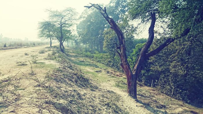 Tree Nature Growth Tranquility Beauty In Nature No People Outdoors Grass Landscape Sky Day Lush - Description Nature Taking Photos Editing Photography Random Shots Check This Out Travel Photography First Eyeem Photo Beauty In Nature