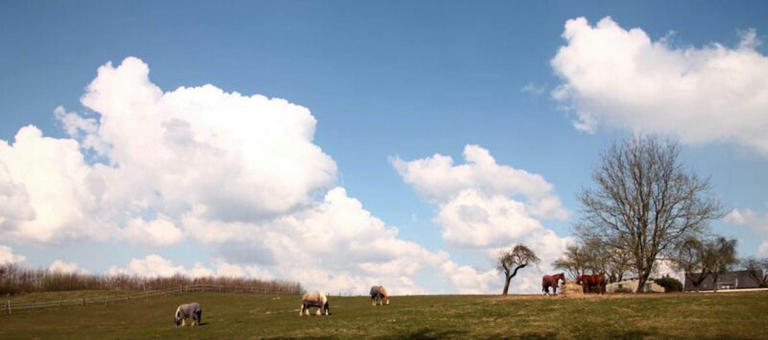 domestic animals, grass, animal themes, sky, mammal, field, landscape, cloud - sky, livestock, grassy, horse, cloud, tree, nature, pets, cow, men, dog, beauty in nature