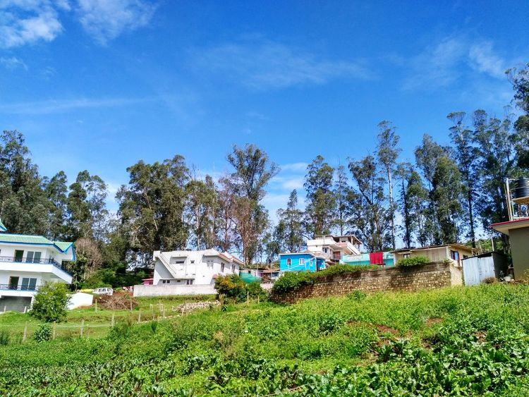 Ooty Ootydiaries India Indiaclicks Nature Sky Grass Growth Outdoors No People Tree Day Ootacamund Tamilnadu Tamilnadutourism Freshness Green Greenery Plants Grassland Grass Houses And Windows House Houses Clear Sky
