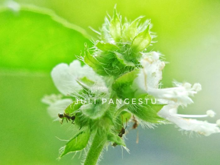 ant & flower Green Color Plant Nature Leaf Close-up Spider Web Focus On Foreground first eyeem photo
