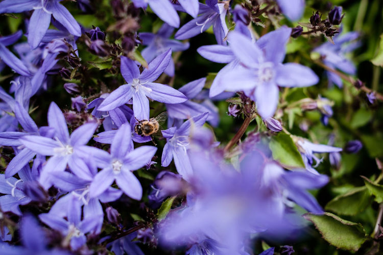 Bees Gardening Green Nature Plant Plants Backgrounds Bee Close-up Colorful Flora Flower Flower Collection Flower Head Flowers Fragility Garden Insect Leaves Naturelovers Nectar Pollination Purple Purple Flower