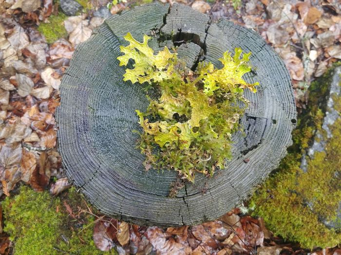 Love Heart Shape Tree Stump Nature Outdoors No People High Angle View Close-up Winter Nature_collection Landscape_collection EyeEmNatureLover Treethugger Tree Forest Rock - Object Scenics Lichen Or Not Moss Green Growth