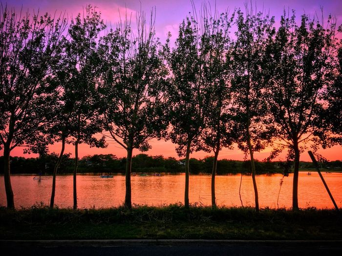 Tree Water Beauty In Nature Nature Sunset Scenics Sea Tranquility Sunset_collection Lake View No People Outdoors Sky Growth Beach Day