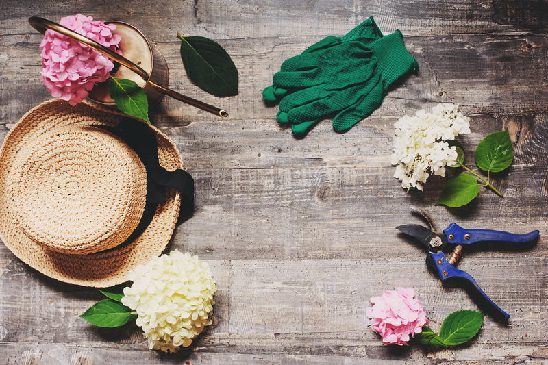 set of hydrangea varieties, different flowers with garden tools, top view on wooden background. Hydrangeas paniculata, macrophyla and arborescens flat lay. Table Plant Wood - Material Flower Flowering Plant Nature Directly Above No People Beauty In Nature Flower Head Hydrangea Variety Garden Garden Tools Hobby Growing Plants Gardener Summer Still Life Colors