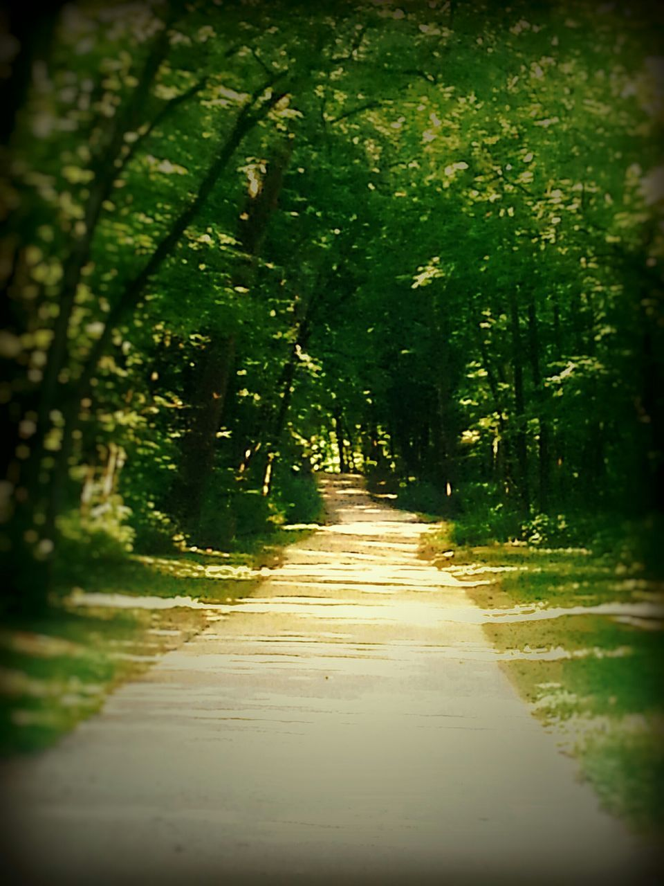 the way forward, nature, diminishing perspective, footpath, forest, growth, tree, tranquility, no people, beauty in nature, walkway, outdoors, day