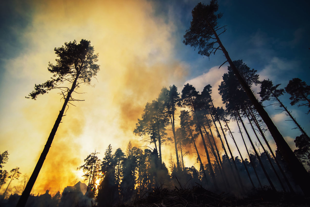Low angle view of fire amidst trees at forest