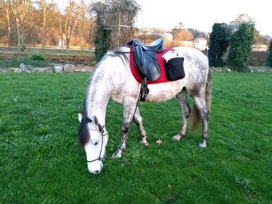 Pim Horse Nature