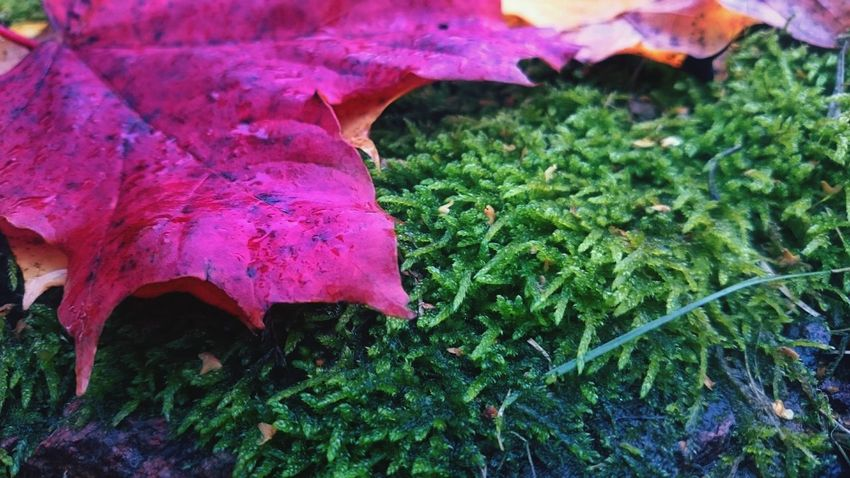 Nature Beauty In Nature Leaf Leaf 🍂 Nature Autumn Black Stone Moss Covered Rocks Colors And Textures Of Nature