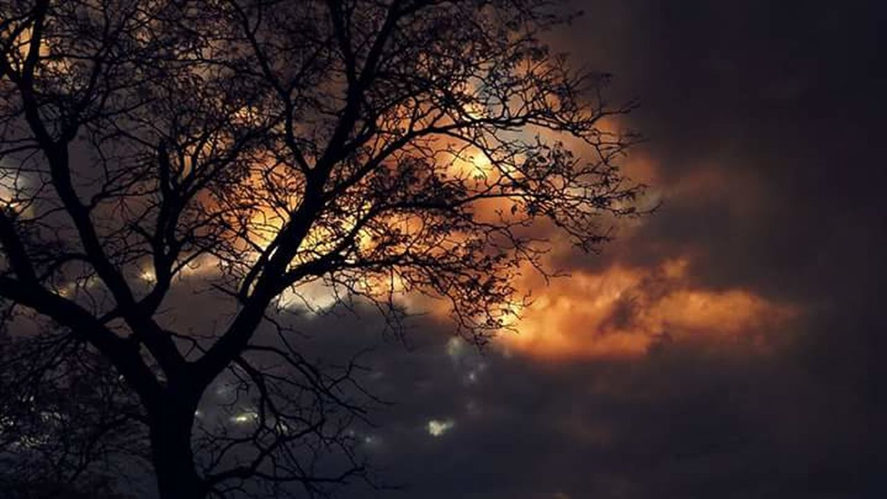 nature, beauty in nature, tree, silhouette, sunset, tranquility, bare tree, sky, scenics, outdoors, branch, tranquil scene, night, moon, low angle view, no people, astronomy
