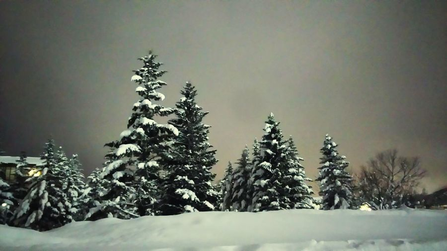 樹氷 Winter Snow 樹氷 静かな夜 夜 Silentnight
