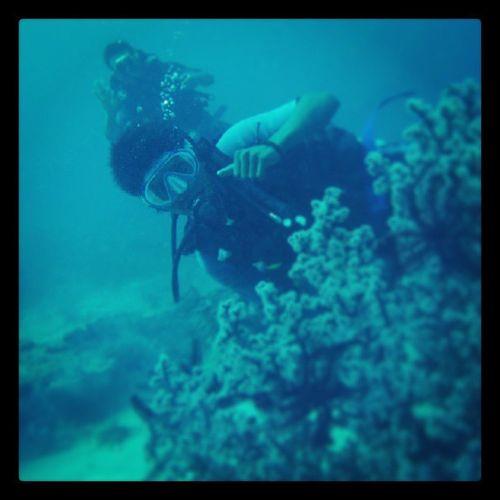 Pelatihan Diving