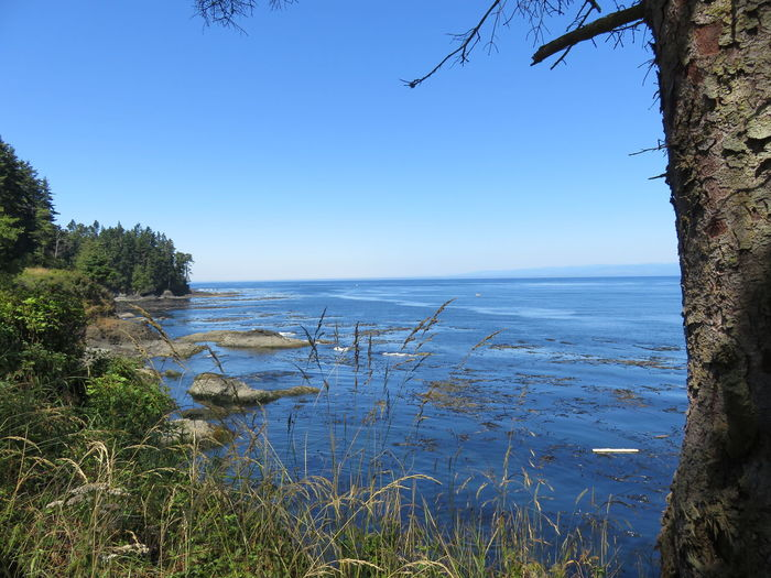 Tide's In Strait Of Juan De Fuca Beach Beauty In Nature Clear Sky Horizon Over Water Land And Sea Land, Sky, And Sea Nature No People Outdoors Plant Scenics - Nature Sea Sky Strait Tranquil Scene Tranquility