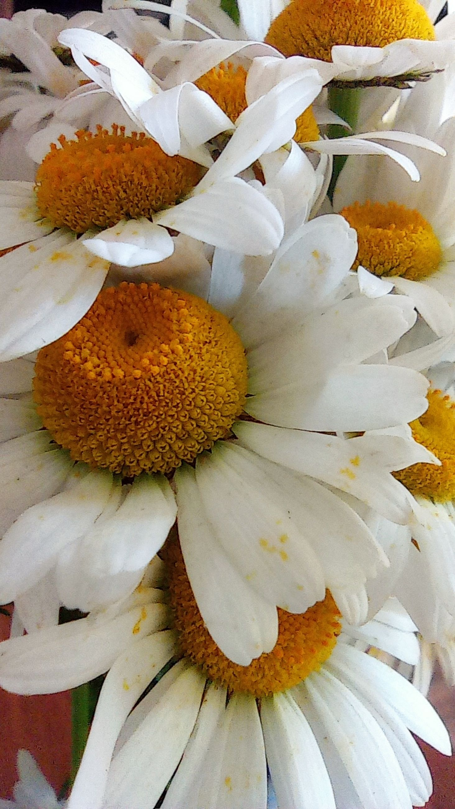 flower, flowering plant, yellow, plant, freshness, beauty in nature, fragility, flower head, petal, pollen, close-up, no people, inflorescence, white, nature, bouquet, growth, food, food and drink