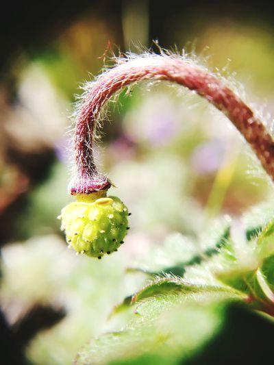 Flower Garden Garden Photography Garden Flowers EyeEm Selects Close-up Plant Green Color Flower Head