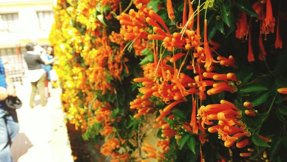 Nature Flowers Nature Wall Lumia1020