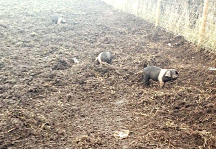 Farm Taking