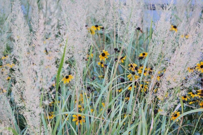 Nature Flower Beauty In Nature Fragility Grass Plant Yellow High Line Park EyeEmNewHere Perspectives On Nature