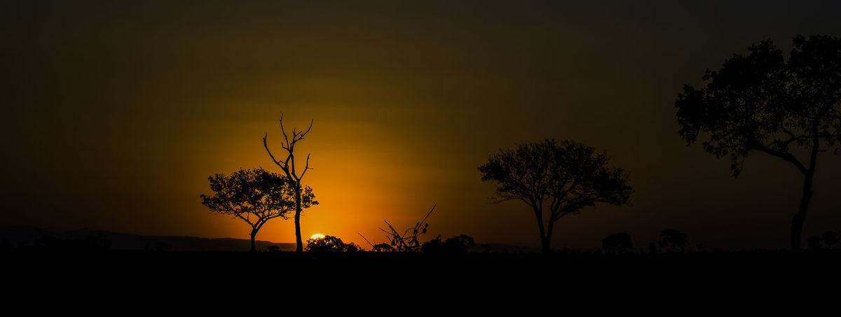 Game Drive Savannah Beauty In Nature Environment Field Growth Idyllic Land Landscape Nature No People Non-urban Scene Orange Color Outdoors Plant Safari Scenics - Nature Silhouette Sky Sunset Tranquil Scene Tranquility Tree